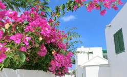 Lanzarote du 12 au 19 Février 2021