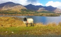 Autotour en Irlande