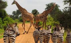 Safari privatif en Tanzanie et Zanzibar